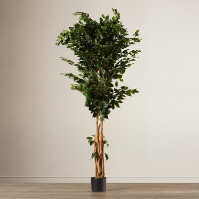 Palace Style Ficus Tree in Pot RDBS1799 27711470