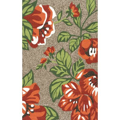 Bromberg Hand Hooked Terracotta Indoor/Outdoor Area Rug Rug Size: Rectangle 5 x 8
