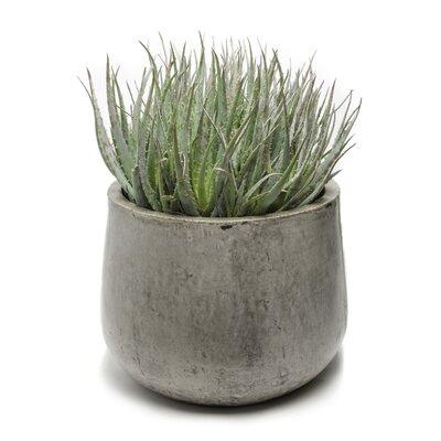 Samai Round Pot Planter Size: Extra Large