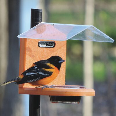 Recycled Jelly Oriole Tray Bird Feeder