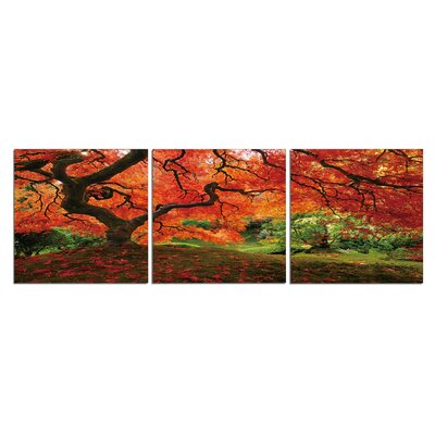 "Japanese Maple Tree 3 Piece Photographic Print Set Size: 20"" H X 60"" W X 1"" D"
