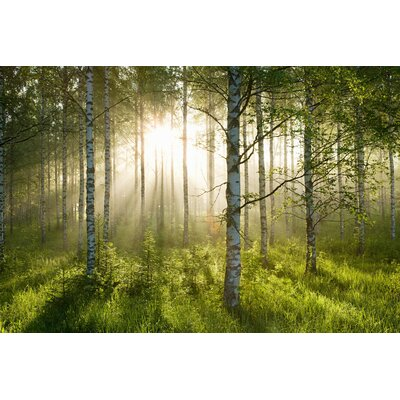 'Enchanted Forest' Photographic Print on Wrapped Canvas Size: 20