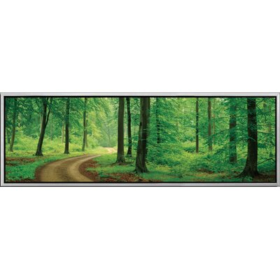 Landscape Panorama A Walk In The Woods Framed Photographic Print