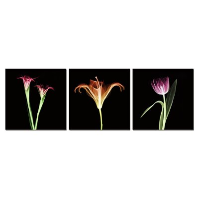 'Tulips X-Ray' Graphic Art Print Multi-Piece Image on Canvas