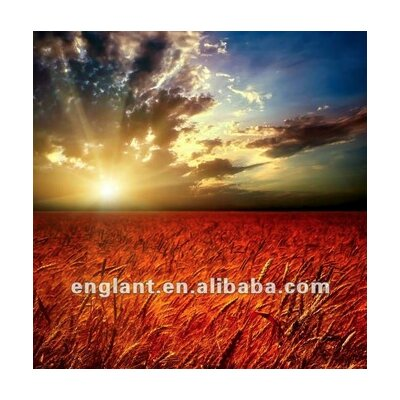 'Sunrise over Grain Field' Framed Photographic Print on Wrapped Canvas