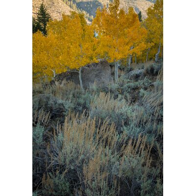 Limited Edition 'Sage and Aspen' Photographic Print 11493