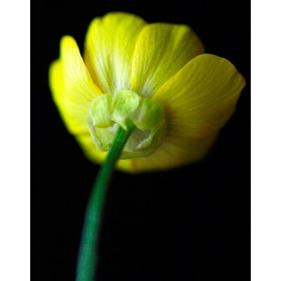 Limited Edition 'Yellow Stem' by Michael Filonow Photographic Print 23541