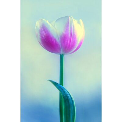 Limited Edition 'Pink' by Michael Filonow Photographic Print 23540