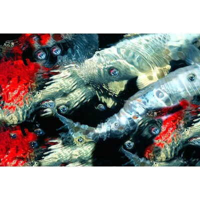 Limited Edition 'Calamari' by J Coleman Miller Photographic Print