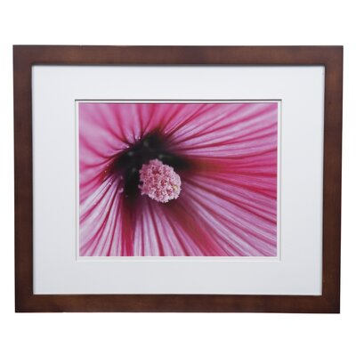 Gallery Solutions Double Mat Picture Frame Color: Walnut, Size: 11