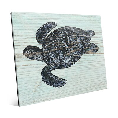 Rustic Sea Turtle Aquamarine Graphic Art RBH0000006ACR11X14XXX