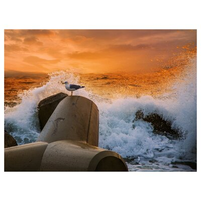 Safety From The Storm Photographic Print 10208