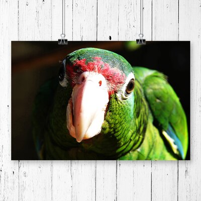 'Parrot Bird' Photographic Print.