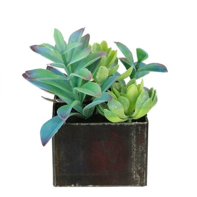 Artificial Desktop Succulents Arrangement Plant in Pot