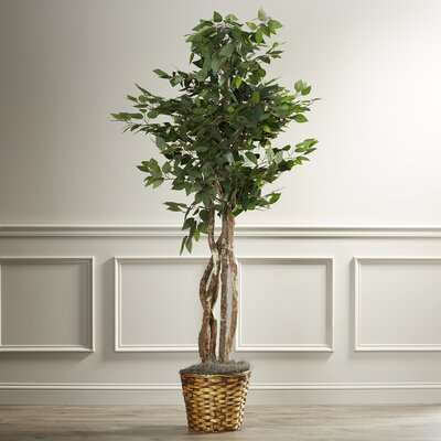 Maura Executive Ficus Tree in Basket