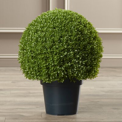 Round Topiary in Pot