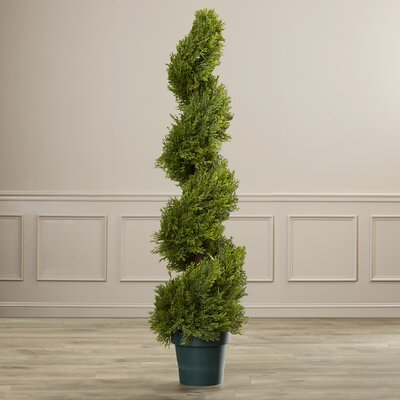Slim Spiral Round Topiary in Pot