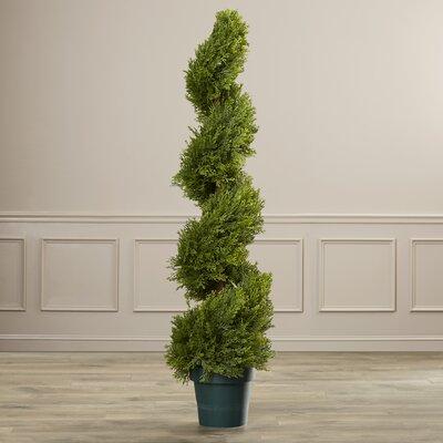 Slim Spiral Round Topiary in Pot