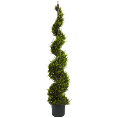 Cypress Spiral Topiary with Pot Size: 60 H
