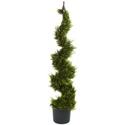 Cypress Spiral Topiary with Pot Size: 48 H