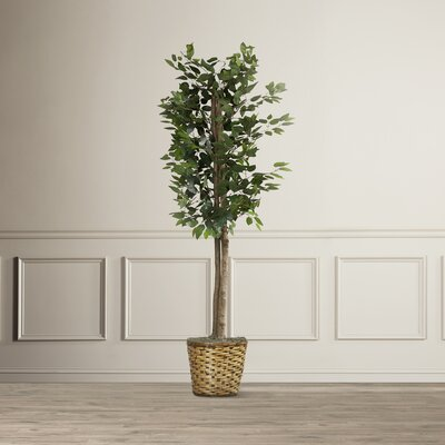 Nigel Artificial Ficus Tree in Planter