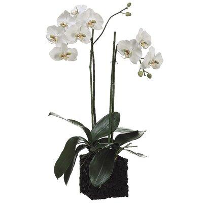 Phalaenopsis Faux Florals Plant