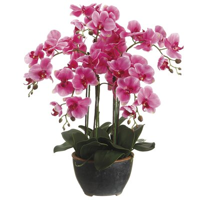 Phalaenopsis Faux Florals Plant in Cera Pot (Set of 2) Color: Orchid