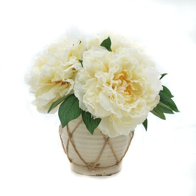 Lush Peonies in Pot