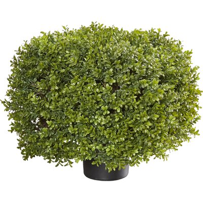 Boxwood Square Topiary in Planter