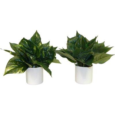 Floor Plant in Decorative Vase