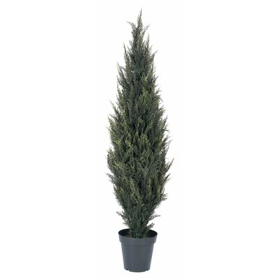 UV Pond Cypress Tree in Pot