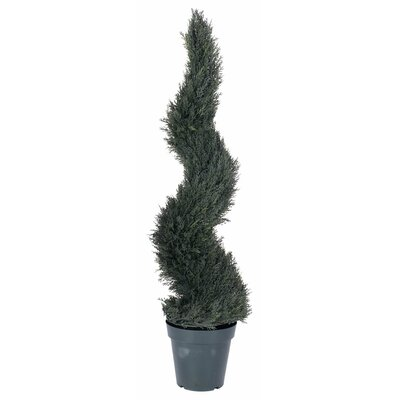UV Pond Cypress Spiral Tree in Pot