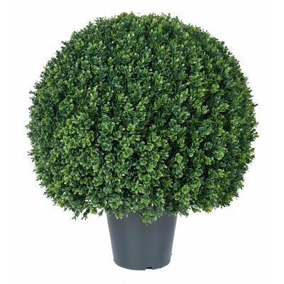 UV Boxwood Round Topiary in Pot