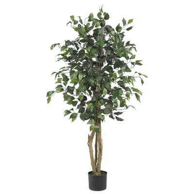 Parkes Silk Ficus Tree in Pot
