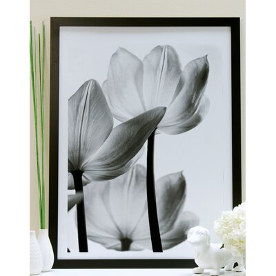 Translucent Tulips III Framed Painting Print