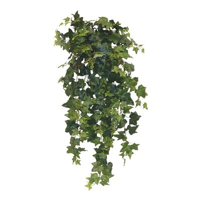 Ivy Hanging Plant Color: English Ivy
