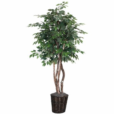Alcott Hill Ficus Heartand Floor Plant in Pot