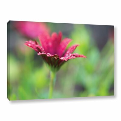 Pedal Raindrops Photographic Print on Wrapped Canvas