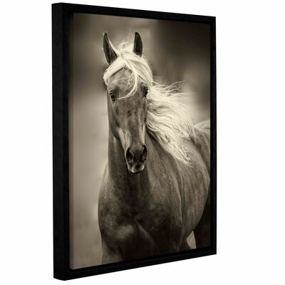 Palomino Framed Photographic Print on Wrapped Canvas