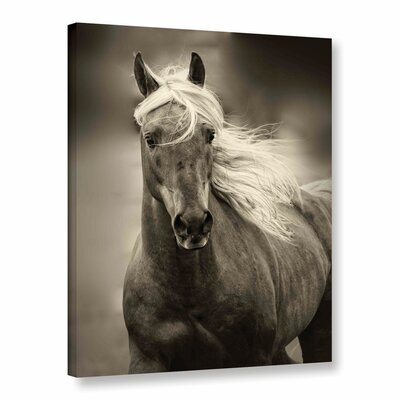 Palomino Photographic Print on Wrapped Canvas