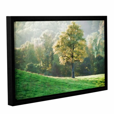 Tree's Evening Glow Framed Photographic Print on Wrapped Canvas Size: 12