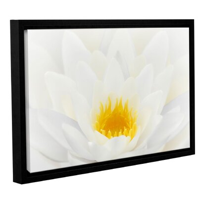 White Waterlily Framed Photographic Print