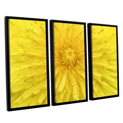 Yellow Dandelion 3 Piece Framed Photographic Print Set