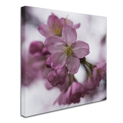 Cherry Pink Photographic Print on Wrapped Canvas Size: 14