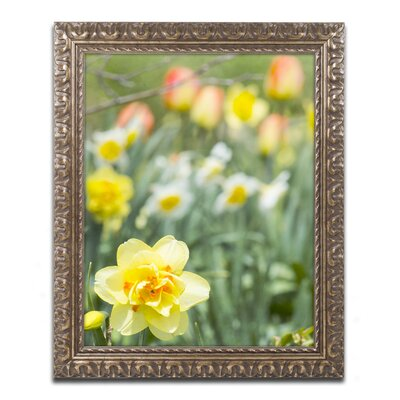 Double Headed Daffodil Framed Photographic Print Size: 14