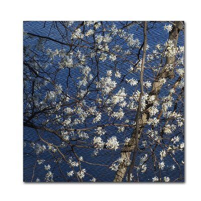 Springtime at the Lake Photographic Print on Wrapped Canvas Size: 14