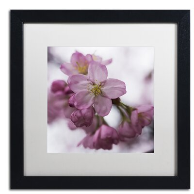 Cherry Pink Framed Photographic Print Size: 16