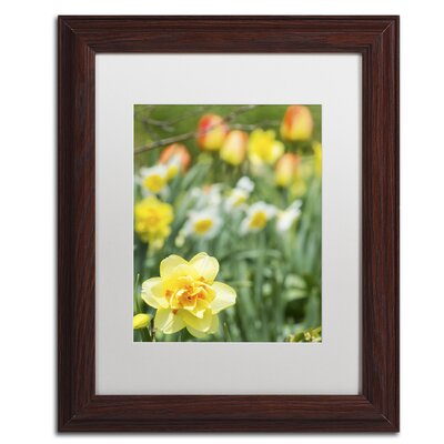Double Headed Daffodil Framed Photographic Print