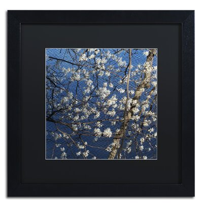 Springtime at the Lake Framed Photographic Print Size: 16