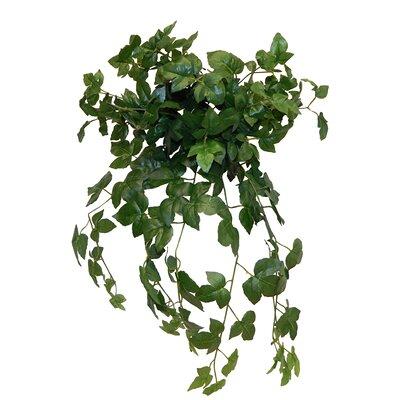 Maple Hanging Bush